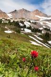 Heller roter indischer Malerpinsel Wildflower unterhalb der felsigen Spitze Lizenzfreies Stockbild