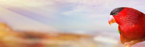 Heller roter Papagei auf dem unscharfen Hintergrund mit sonnigem tropischem Strand Lizenzfreies Stockfoto