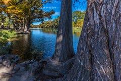Heller schöner Herbstlaub auf Crystal Clear Frio River lizenzfreies stockfoto