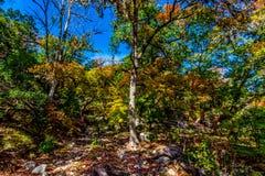 Heller schöner Herbstlaub auf erstaunliche Ahornbäume in Texas stockfoto