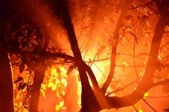 Heller Schaffungseffekt des luminious Baums in der nebeligen Nacht der wi Lizenzfreie Stockfotos