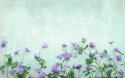 Heller Schmutzhintergrund mit violetten wilden Blumen Stockfotografie