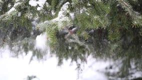 Heller Schnee, der von einem Baum fällt stock video