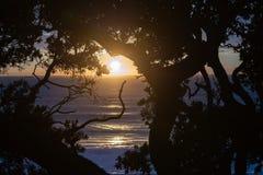 Heller Sonnenaufgang über dem Ozean gestaltet durch Schattenbildbäume stockfoto
