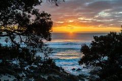 Heller Sonnenaufgang über dem Ozean gestaltet durch Schattenbildbäume stockbild