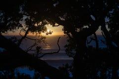 Heller Sonnenaufgang über dem Ozean gestaltet durch Schattenbildbäume lizenzfreies stockfoto