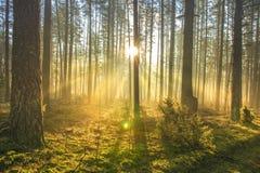 Heller Sonnenschein strahlt durch Bäume in der grünen Frühlingswaldlandschaft des Waldes am frühen Morgen aus natürliche Natur lizenzfreie stockfotos
