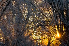 Heller sonniger Kiefernwald im Schnee lizenzfreie stockfotos