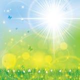 Heller sonniger mit Blumenhintergrund des abstrakten Frühlinges Stockfotografie