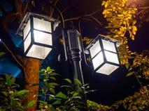 Heller Straßen-Straßenbeleuchtungsnaturbaum stockfotos