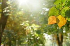 Heller Tag des Herbstes Stockbild