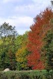 Heller und sonniger später Fall-Neu-England Tag in einer Wiese von Bäumen gesäumt Stockfotos