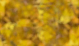 Heller unscharfer Hintergrund des Herbstlaubs Farben des Herbstes stockfoto
