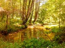 Heller Wald Lizenzfreies Stockfoto