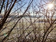 Heller Winterschneefall auf das ländliche Ackerland angesehen durch die Niederlassungen Stockfoto