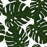 Helles abstraktes tropisches Gestaltungselement Lizenzfreie Stockbilder