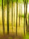 Helles belaubtes Waldland mit dem Verschieben des Effektes stockbilder