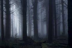 Helles durch die Bäume während eines nebeligen Tages im Wald überschreiten lizenzfreies stockfoto