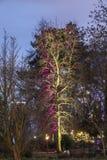Helles Ereignis Winterlichter bis zum Nacht im Palmgarden in Frankfu Stockfoto
