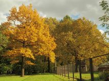 Helles Gelb ist die Hauptfarbe des Herbstes stockfoto