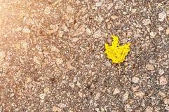 Helles gelbes Blatt auf grauem Asphalt auf dem Recht stockfoto