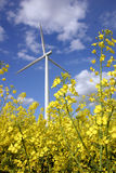 Helles gelbes Rapssamenfeld mit Windmotor stockfotografie