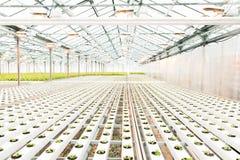 helles Gewächshaus und die Produktion von Obst und Gemüse von stockfoto