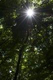 Helles Glänzen Sun durch Bäume Stockfotos