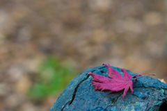 Helles Herbstblatt Stockfotos