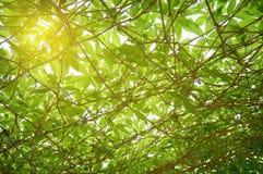 Helles junges grünes Laub entziehen Sie Hintergrund Stockfotos