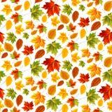 Helles Muster für Webdesign- und Designstandorte Entwerfen Sie Schablone, Herbstlaub, Ahornblätter, Gelb, Grün, Rotblätter Vektor Stockbild
