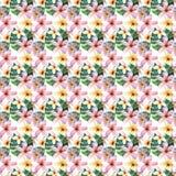 Helles schönes grünes Blumentropisches reizendes Hawaii-nettes Mehrfarbensommerkräutermuster von tropische Blumen Lizenzfreies Stockbild