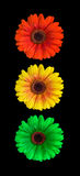 Helles Signal der Blume Stockfotos