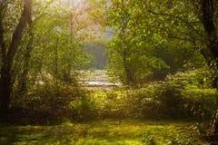 Helles Sonnenlicht durch Baumkronen Lizenzfreies Stockfoto