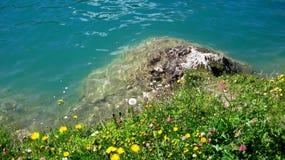 Helles Stück der Wiese auf dem See Lizenzfreies Stockbild
