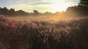 Helles sunrtise über Heidemoor stockfotos