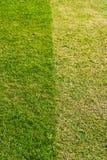 Helles und dunkelgrünes Gras Lizenzfreie Stockfotos