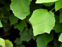 Helles vibrierendes Grün verlässt mit Raum, damit Kopienraum für Hintergründe oder Fahnen verwendet Stockbilder
