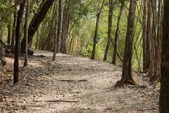 Hellfire Pass hiking trail on the notorious Burma to Thailand death railway. Where thousands of Allied POWs and Asian labourers died during the Second World Royalty Free Stock Photography