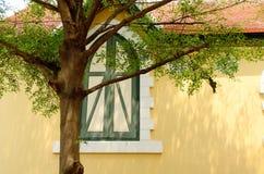 Hellgelbe Wand mit klassischem Fenster und Baum Stockfoto