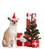 Hellgelber Hund nahe den Geschenken Lizenzfreie Stockfotografie