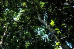 Hellgrün und die Bäume im Wald Lizenzfreie Stockfotos