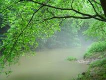 Hellgrüne Blätter, die über nebelhaftem Fluss hängen Lizenzfreies Stockfoto