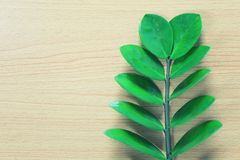 hellgrüne Blätter werden auf einen braunen Bretterboden gesetzt Lizenzfreie Stockfotografie