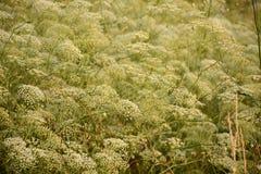 Hellgrüner Blumenhintergrund Stockbild