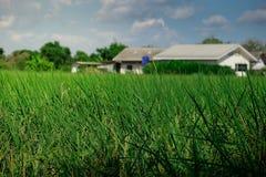 Hellgrüner Gras-Hintergrund Stockfotos