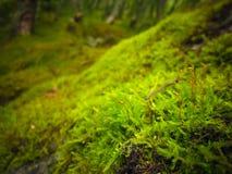 Hellgrüner Moosteppich lizenzfreie stockbilder