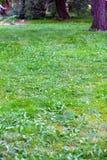 Hellgrüner Rasen Stockbilder