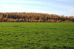 Hellgrünes Gras an der Herbstlandschaft stockbilder