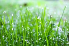 Hellgrünes Gras mit Tautropfen stockfotografie